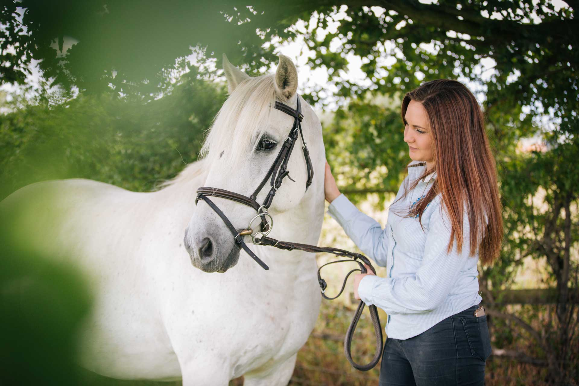 Equine Portraits at the Yard