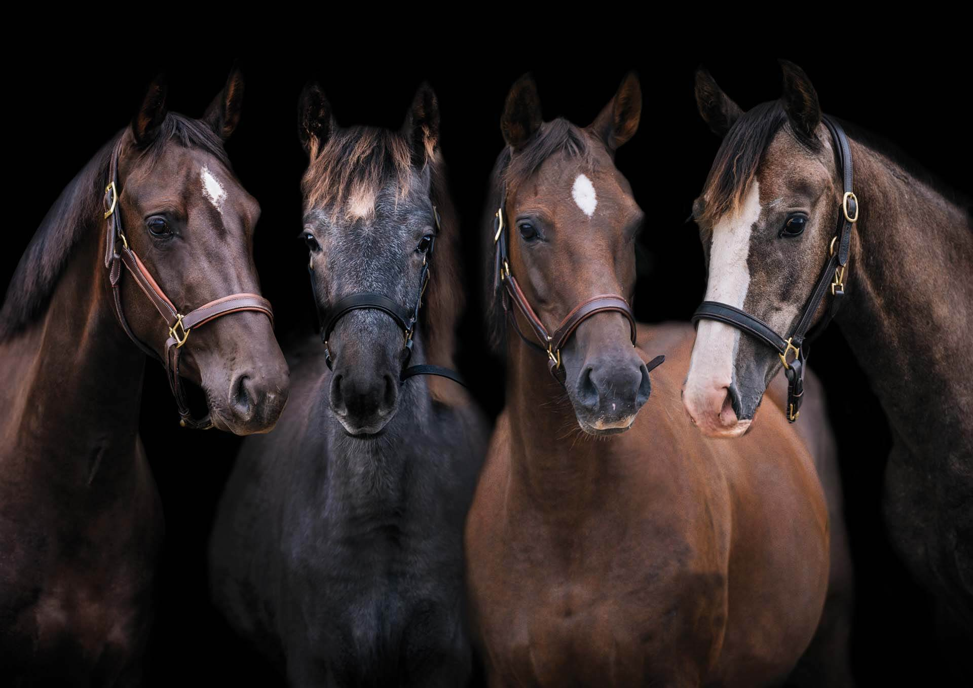 Fine art Equine Photography Joanna Eardley