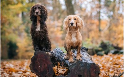 Autumn Photoshoot with Cheshire K9 training